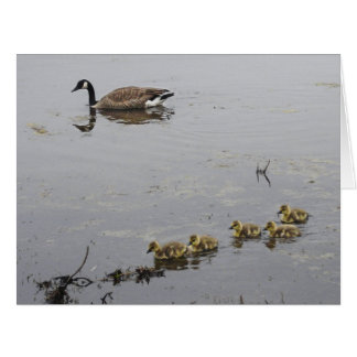Mother Goose and Goslings BIG card