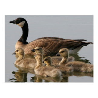 Mother Goose and Her Goslings Postcard