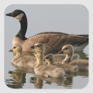 Mother Goose and Her Goslings Square Stickers
