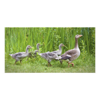 Mother goose leading goslings in the wild customized photo card