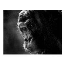 Mother Gorilla Postcard