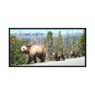 Mother Grizzly, Cubs in Yellowstone National Park Canvas Print