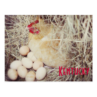 Mother Hen by JerseyFawn Postcards
