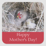 Mother Hen with New Chicks Stickers