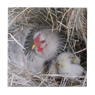 Mother Hen with New Chicks Tile