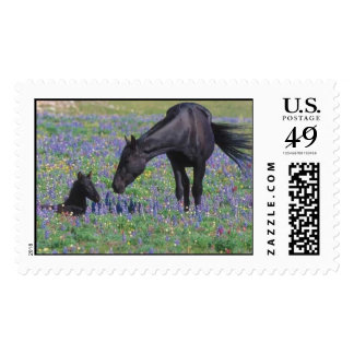 Mother Horse pos days Stamps