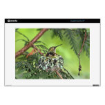 Mother Hummingbird on Nest Decal For Laptop