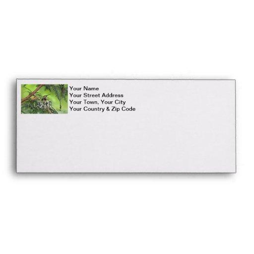 Mother Hummingbird on Nest Envelopes