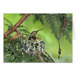 Mother Hummingbird on Nest Greeting Cards