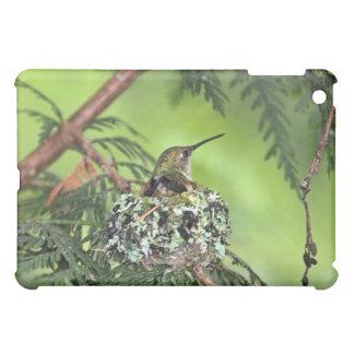 Mother Hummingbird on Nest iPad Mini Cases