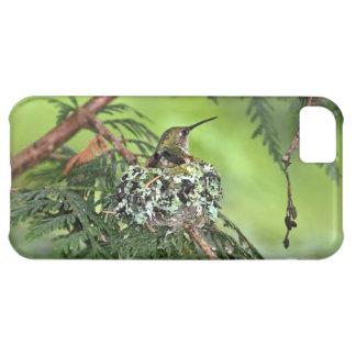 Mother Hummingbird on Nest iPhone 5C Case
