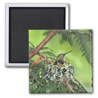 Mother Hummingbird on Nest Magnet