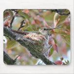 Mother hummingbird on nest - Mousepad