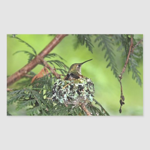 Mother Hummingbird on Nest Sticker