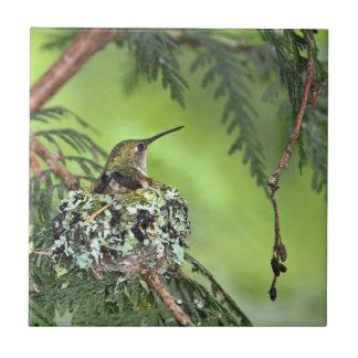 Mother Hummingbird on Nest Tile