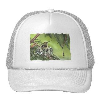 Mother Hummingbird on Nest Trucker Hat