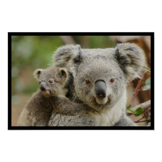 Mother Koala and her Joey Poster