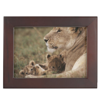 Mother Lion sitting with cubs Keepsake Boxes