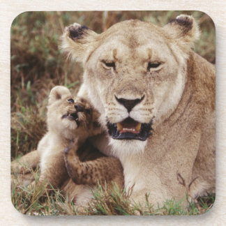 Mother lion sitting with her cub coaster