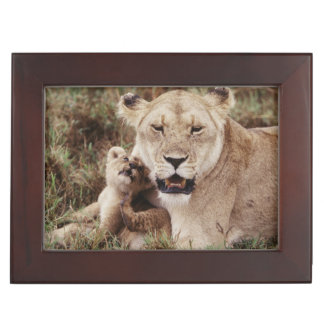 Mother lion sitting with her cub memory box