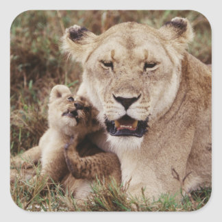 Mother lion sitting with her cub square sticker