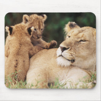 Mother lion with cubs mouse pad