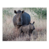 Mother Love - Rhino Style Postcard