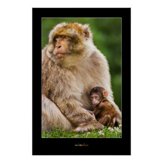 Mother Macaque and Baby Poster