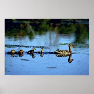 Mother Mallard Duck With Chicks Print