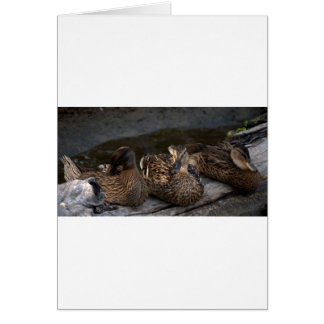 Mother Mallard & Two Children Greeting Card