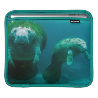 Mother manatee with her calf in Crystal River iPad Sleeve