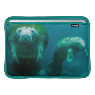Mother manatee with her calf in Crystal River MacBook Sleeve