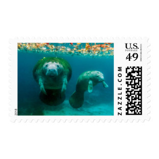 Mother manatee with her calf in Crystal River Stamp