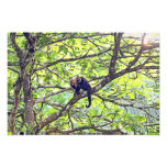 Mother Monkey and Baby in Jungle Art Photo