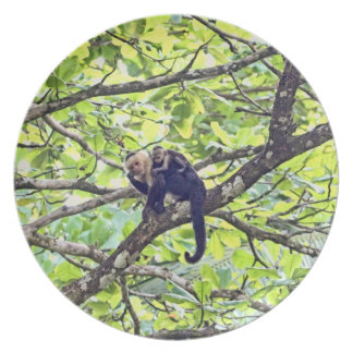 Mother Monkey and Baby in Jungle Party Plates