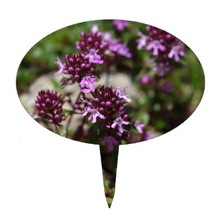 Mother of thyme flowers (Thymus praecox) Cake Topper