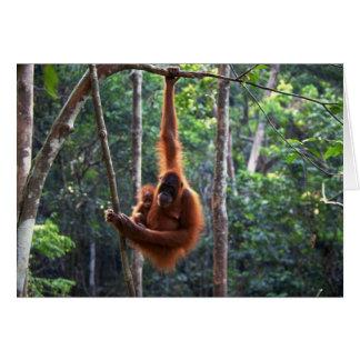 Mother Orangutan and Baby Card