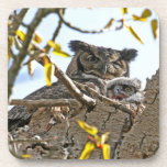Mother Owl and Baby in Nest Beverage Coasters