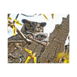 Mother Owl and Baby in Nest Gallery Wrapped Canvas