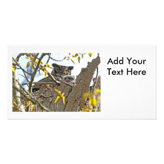 Mother Owl and Baby in Nest Custom Photo Card
