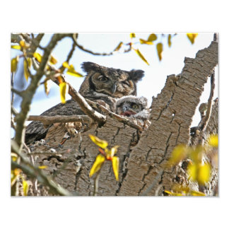 Mother Owl and Baby in Nest Photographic Print