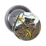 Mother Owl and Baby in Nest Pinback Buttons