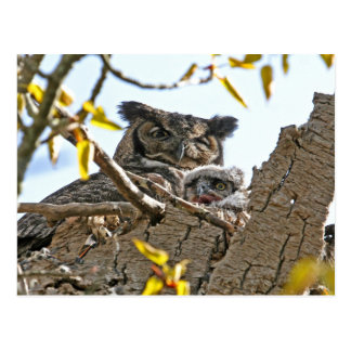 Mother Owl and Baby in Nest Postcard