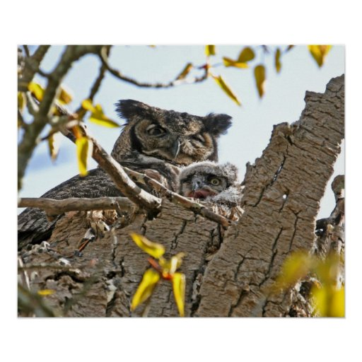 Mother Owl and Baby in Nest Poster