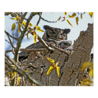 Mother Owl and Baby in Nest Print