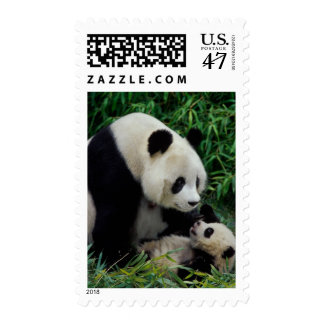 Mother panda and baby in the bamboo bush, Wolong Postage