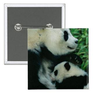 Mother panda nursing cub, Wolong, Sichuan, China Pinback Buttons