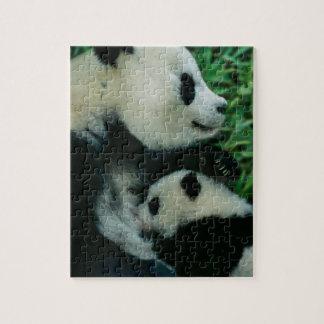 Mother panda nursing cub, Wolong, Sichuan, China Jigsaw Puzzle