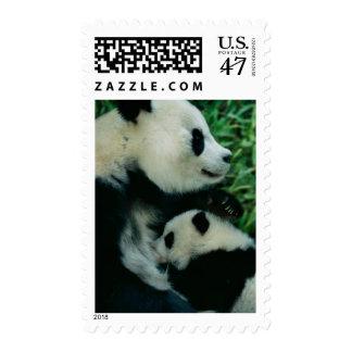 Mother panda nursing cub, Wolong, Sichuan, China Postage