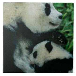 Mother panda nursing cub, Wolong, Sichuan, China Tile